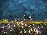 重返天真烂漫的少女时代 AIR SECRETS清新雏菊香氛梳