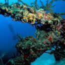 全球八大顶级潜水地点 最美丽的水下乐园