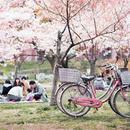 日本关西赏樱之旅 收藏好这一篇就够了