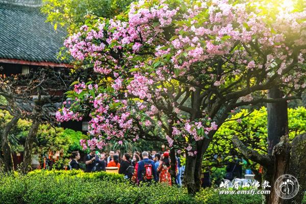 首批国家全域旅游示范区名单公示 四川省三家入围