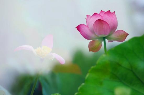 慈悲心并非要你去受不必要的苦或失去判断力。
