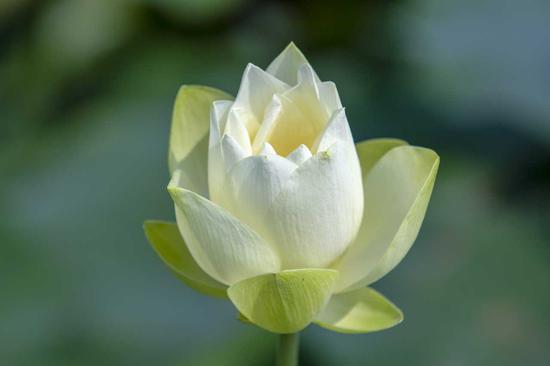 若向性中能自见,即是成佛菩提因。(摄影:海琳)