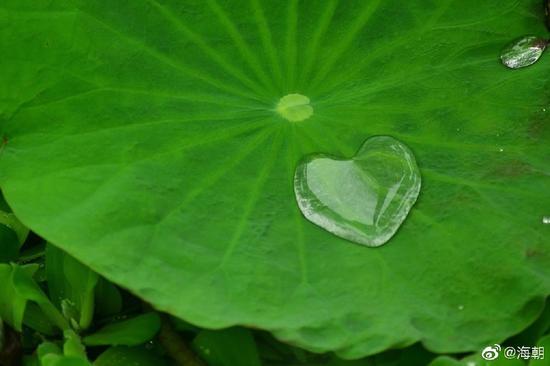 守一者,守一心。如入如来禅者,理观心如,入如是地,即入实际。(摄影:海朝)