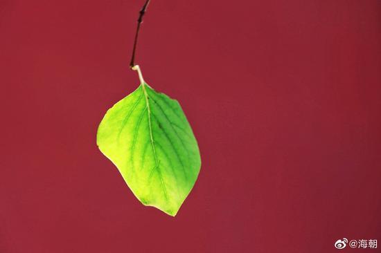 佛教的最基本的真理是无常。(摄影:海朝)