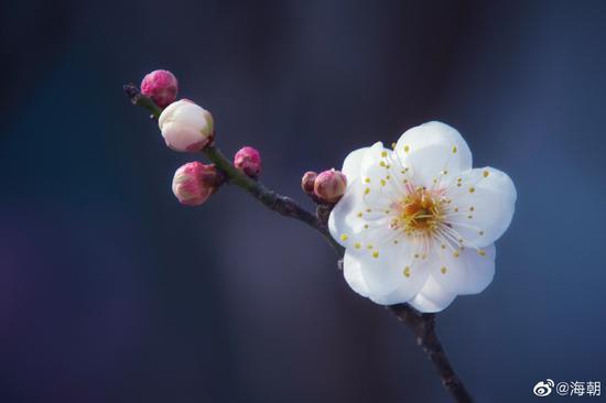 佛教提倡中观之理,不偏不倚,不过度、不紧缩,不影响正常的生活。(摄影:@海朝)