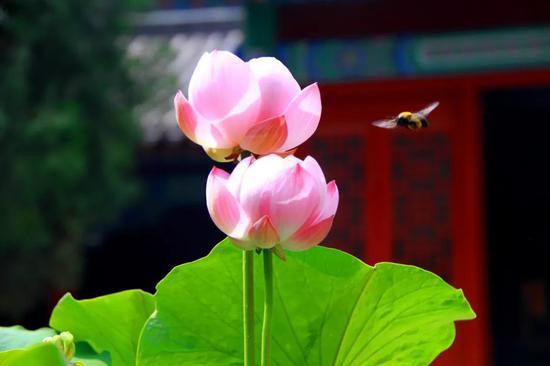 在生活中要随时结善缘、种善因、善待一切