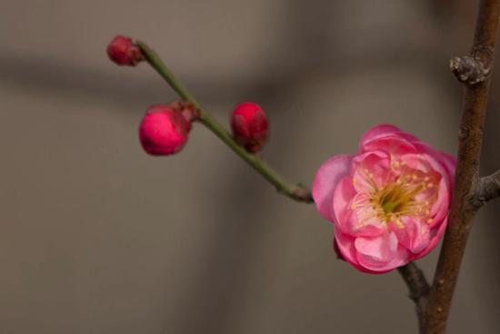 怎样培养对佛法的诚心和恭敬心?(摄影:悟澎)