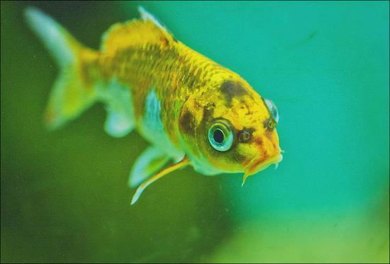 鱼儿水里游,照见轮回苦