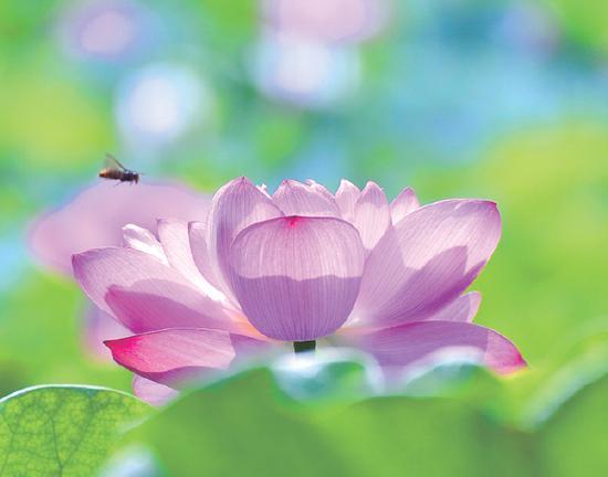 愿一切众生都能闻信念佛法门,同生极乐世界!(图片来源:净土杂志)