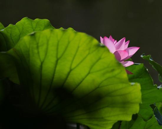 只要心怀慈悲,就能免于恼怒、生气或失望。