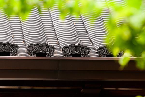 禅意摄影:玉佛禅寺初夏风光