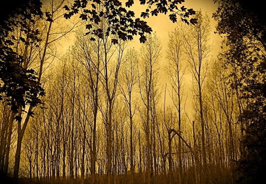 莫听穿林打叶声,何妨吟啸且徐行