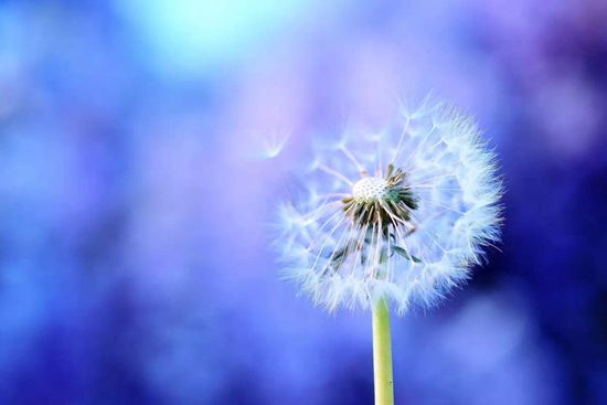 只要把佛法用一点点在心上,就会体验到改变的快乐。