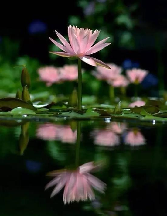 第一:你一定要宽恕众生。第二:改变自己,胜于改变别人。