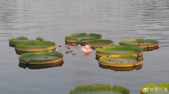 佛教的整个修行次第,信、解、行、证四个阶段缺一不可。