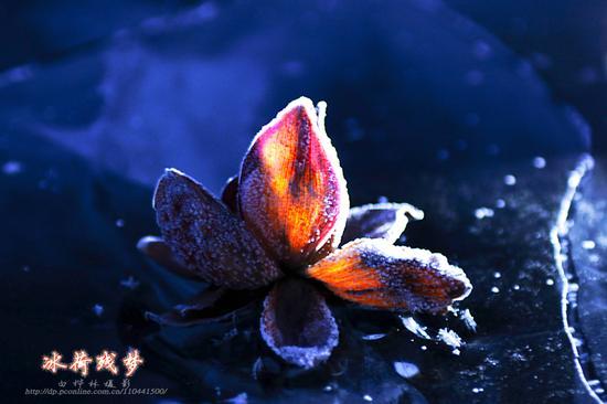 禅诗赏析:冰山赏花