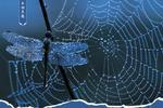 走出迷惘:网迷与迷网的较量