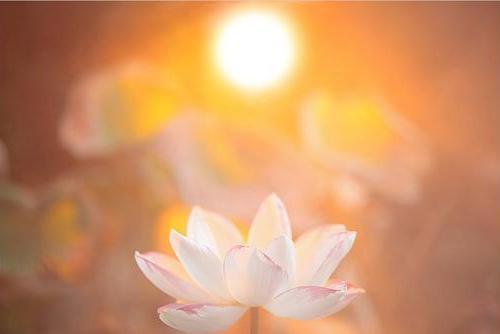 """你能够""""善用其心"""",未来的生命就在你的掌握之中。"""