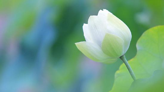 善用其心慈悲行, 一路菩提一路歌。