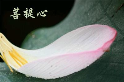 菩提心者,则为一切诸佛种子。(图片来源:少林寺)