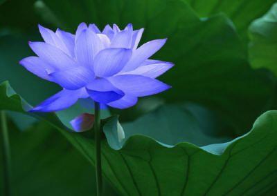 """佛教如何看待""""欲望""""?"""