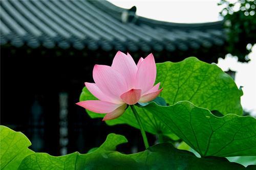 佛性,是一切众生的本源