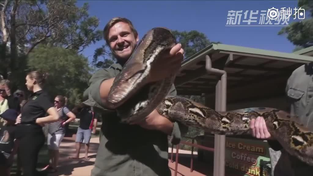 """快来看!澳大利亚57公斤""""怪兽"""""""