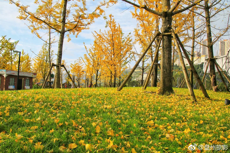 金色秋天金彩盘州