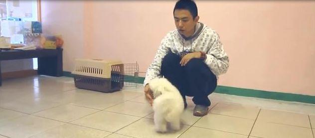 专业狗爸告诉你,怎样才能训练狗狗不咬人,让它变得温顺有教养