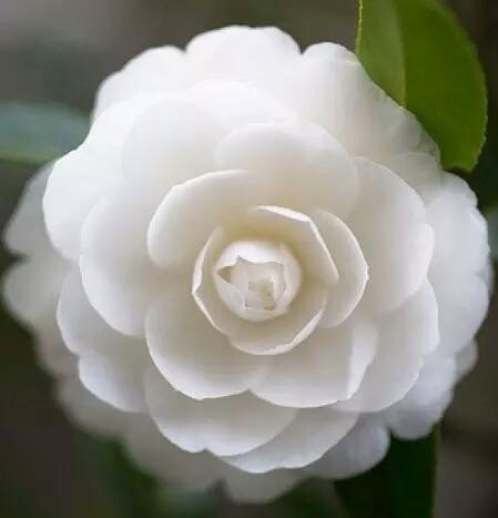 艳仹.b�i*yg,9.#yk�y�dy��_心理测试:哪朵花开得最艳,看你是个花心大萝卜吗?别不