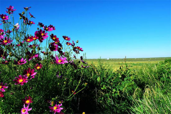 鄂尔多斯草原