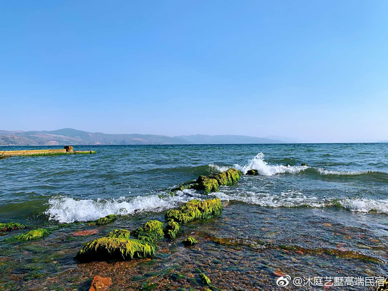 春天的青草与花香 三月丽江