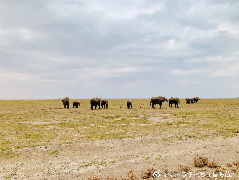 安博塞利 大象的天堂