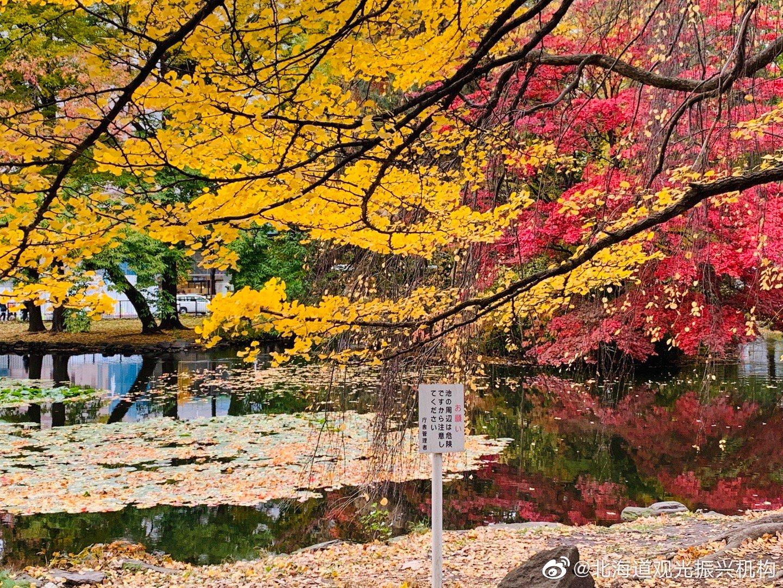 北海道道厅的红叶