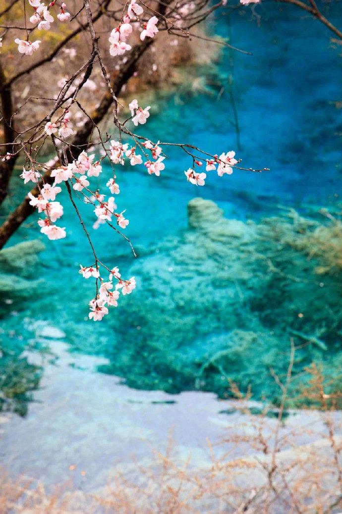九寨沟的春天,迷人的人间天堂