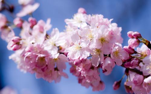 3月18号起,出门遇桃花,事业有贵人,注定事事顺心的三个星座