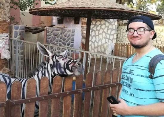 埃及动物园画驴充斑马被游客一眼看穿