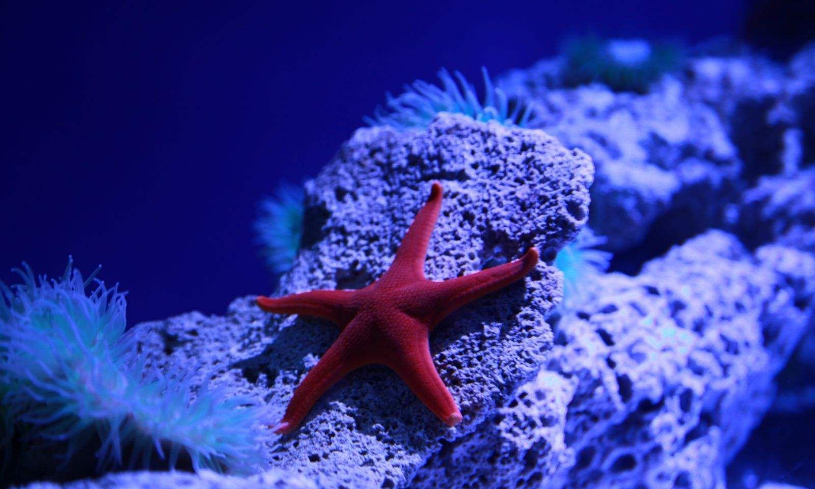 海底10000米,没有阳光,那些动物都靠什么生存?图片