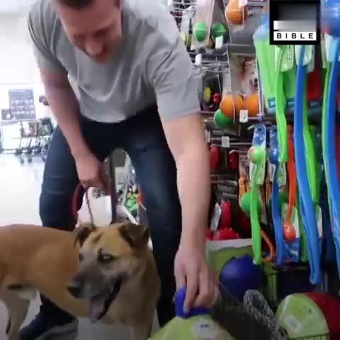 残疾的流浪狗被救助后第一次去逛宠物超市