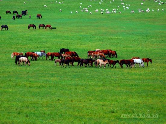 来苏泊罕大草原和自然约会