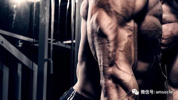 肱三頭肌和功能