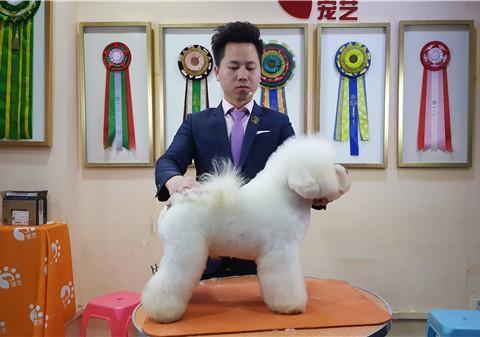 宠物美容师培训哪的学校技术好