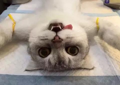 猫咪睾丸结构图