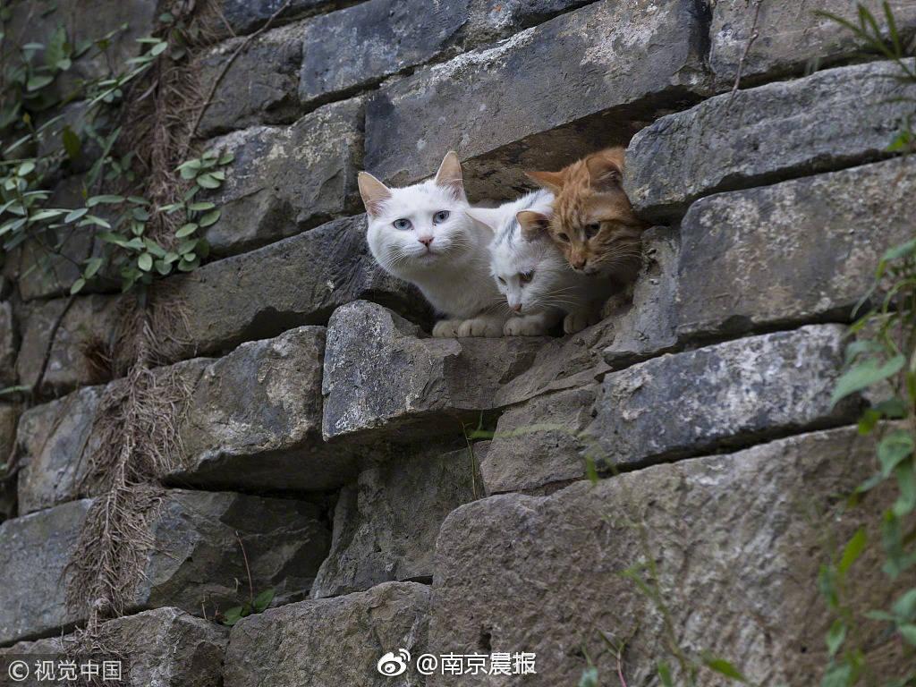 朝阳学校文化节启动 年底将进行集中评审