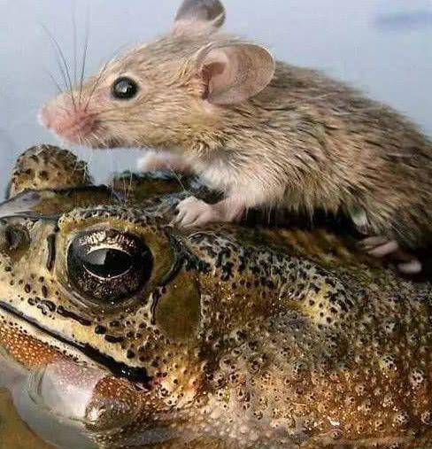 当洪水来了时,动物都是怎么逃生的?老鼠的机智,蚂蚁的太恐怖!