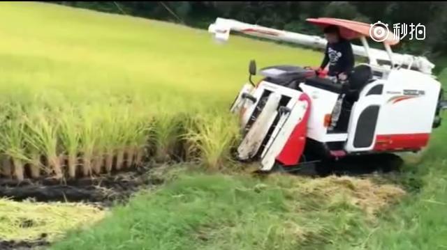 惊人的新技术,小巧灵活的水稻收割机器,农民在也不用愁了 ?