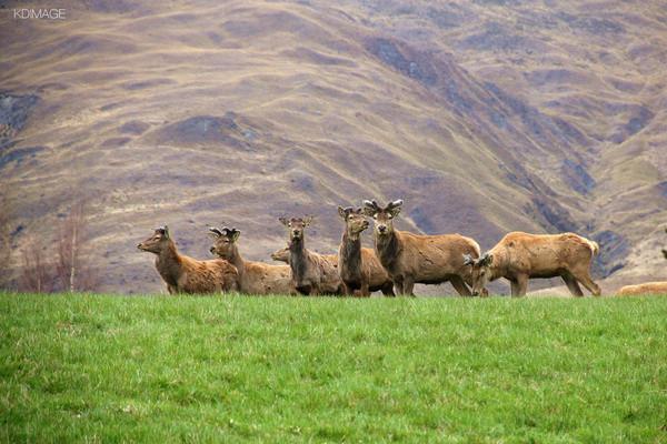自驾旅行:新西兰的纯天然动物世界图片