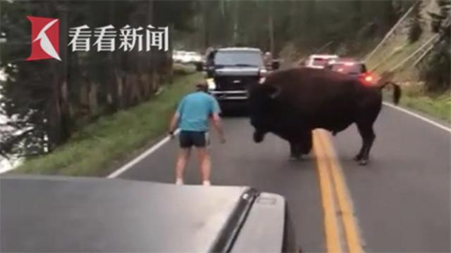 """黄石公园男子疯狂""""作死"""" 下车挑衅近1吨美洲野牛被逮捕"""