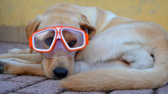 11种狗狗不能吃的食物,不仅有害健康,甚至会导致爱宠死亡!