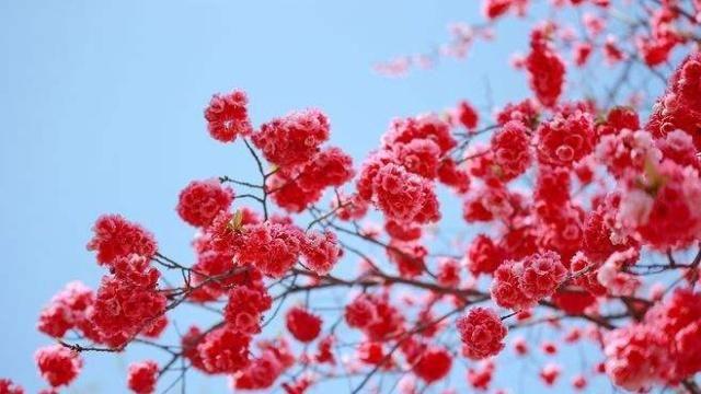 作文华府50句描写春天的优美小学(给孩子收藏鼎小学世句子图片